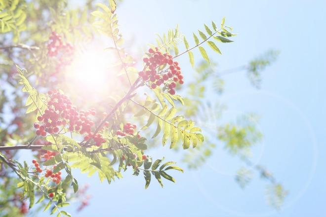 Zon in de tuin