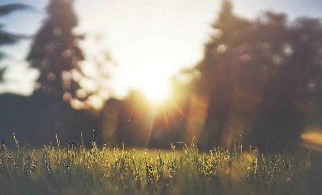 Tuininrichting in kleine tuinen: inspirerende voorbeelden en tips