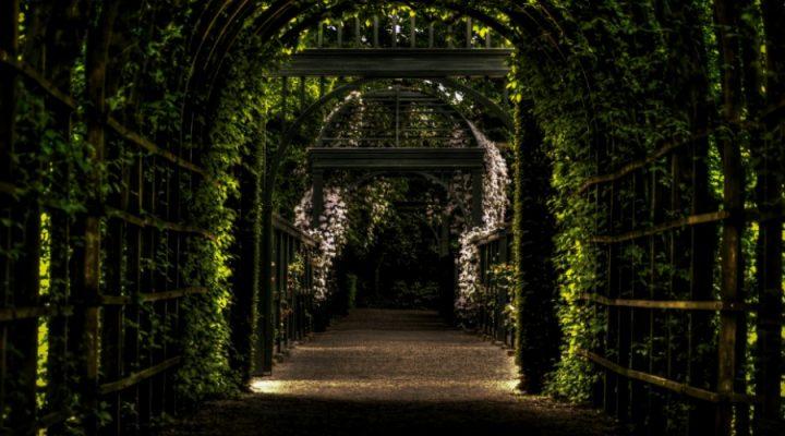 Betonmatten met klimop, de tuintrend van 2017