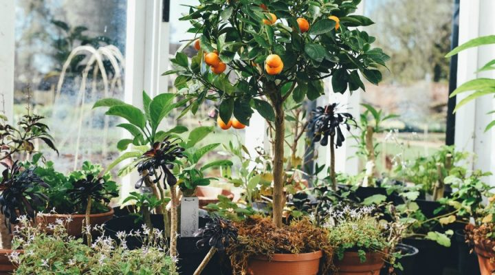 Maak je tuin klaar voor de zomer!