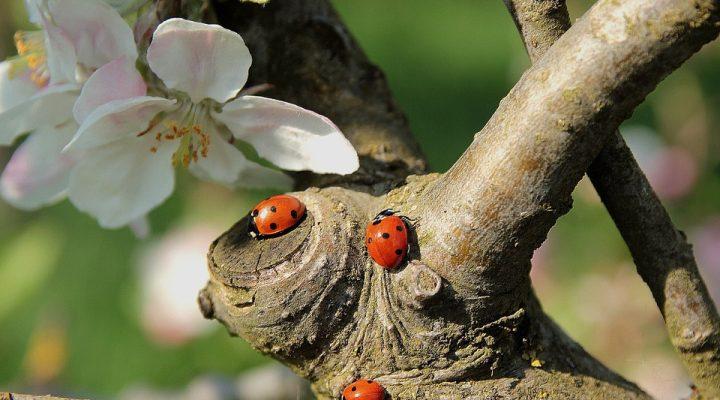 Je tuin is een fijne plek voor ongedierte