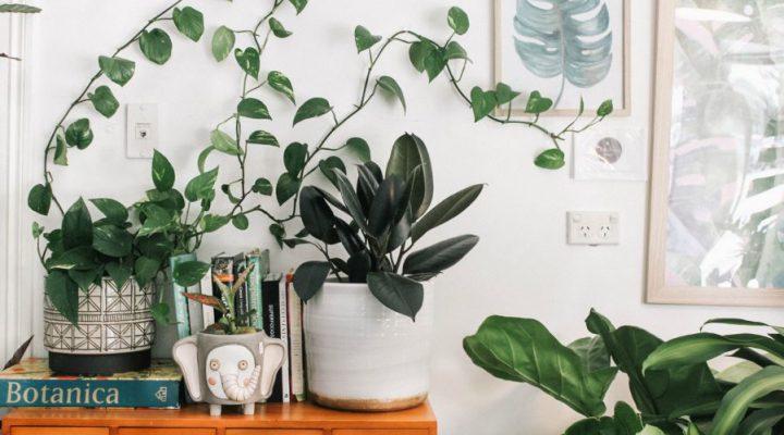 Fleur je kamer op met kunstplanten!