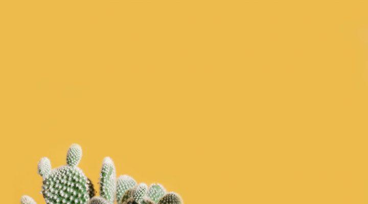 5 dingen die je nog niet wist over cactussen