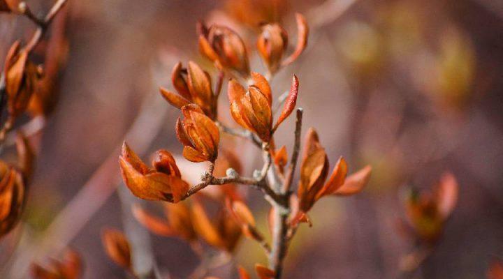 5 mooie winterplanten en bloemen voor een gezellige wintertuin