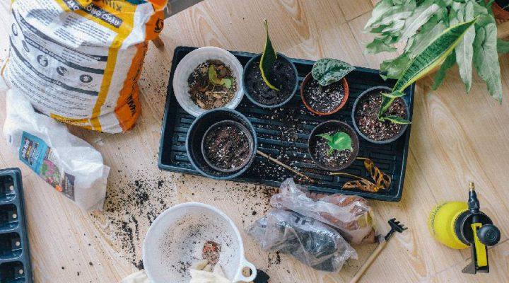 3 tips om je tuin weer zomer-klaar te maken!