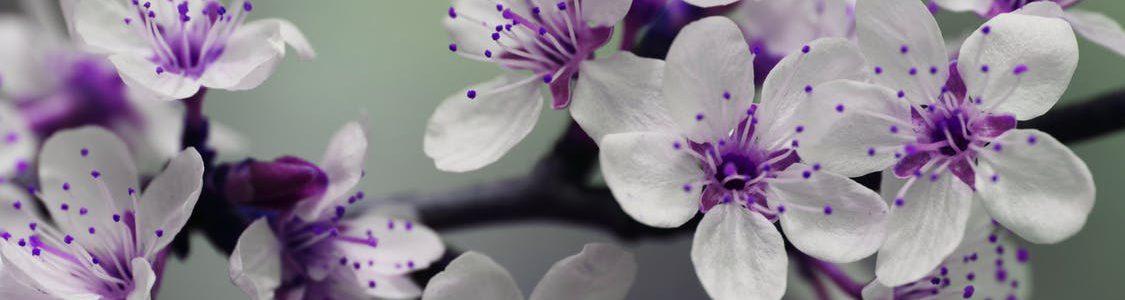 Iedereen is gek op bloemen, maar waarom?
